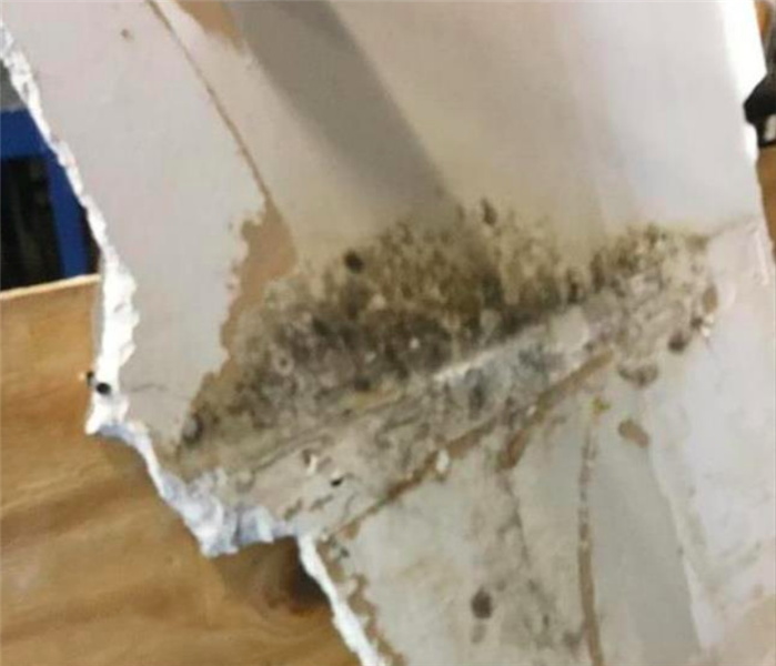 mold on piece of drywall