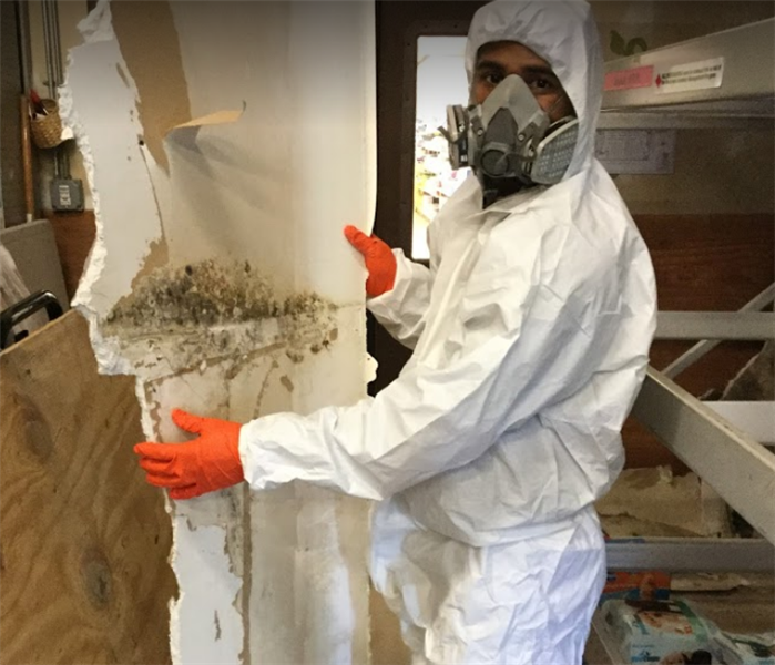 male employee in ppe holding piece of drywall with mold on it